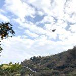 急傾斜地でみかん20㎏をドローンで自動運搬 慶應、神奈川県、ブルーイノベーションが小田原で自動運搬実験