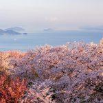 桜を4K配信! 横田淳氏率いるドローンエンタテインメント、「オンラインお花見大会」開催へ