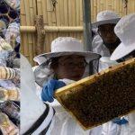 ワイズ技研、今度はドローン技術でミツバチの行動解析 埼玉・羽生の高校生と養蜂支援に挑戦