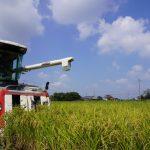 プレナス、自社生産米を初収穫 スマート農業挑戦の新米をオーストラリア「やよい軒」へ
